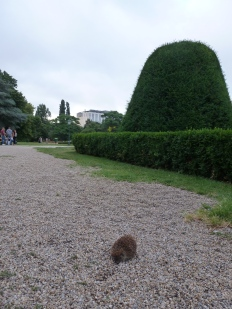 An unexpected friend in Stadtpark!
